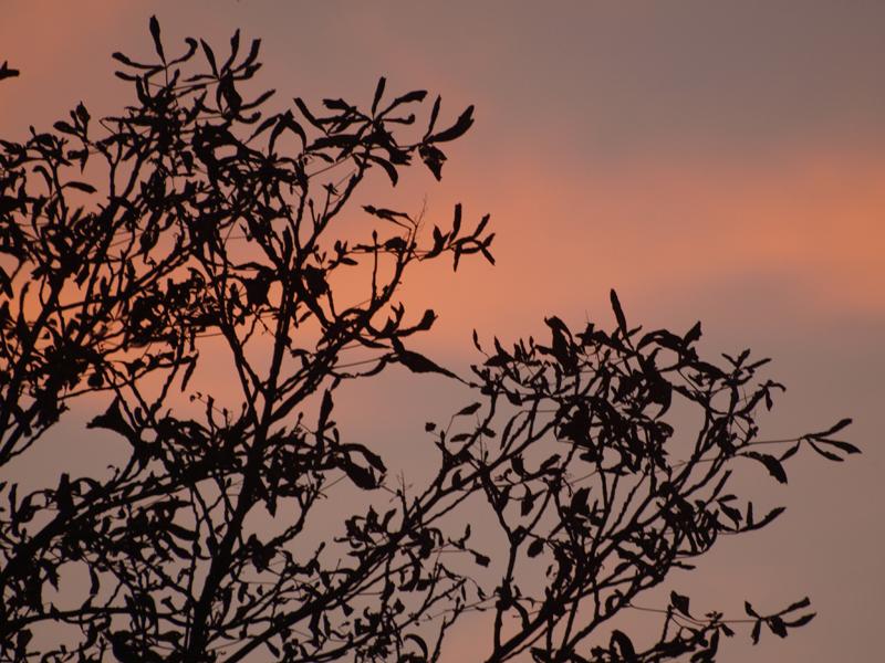 rami nel tramonto