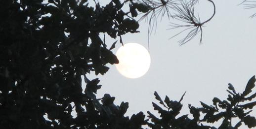 luna albero_cover