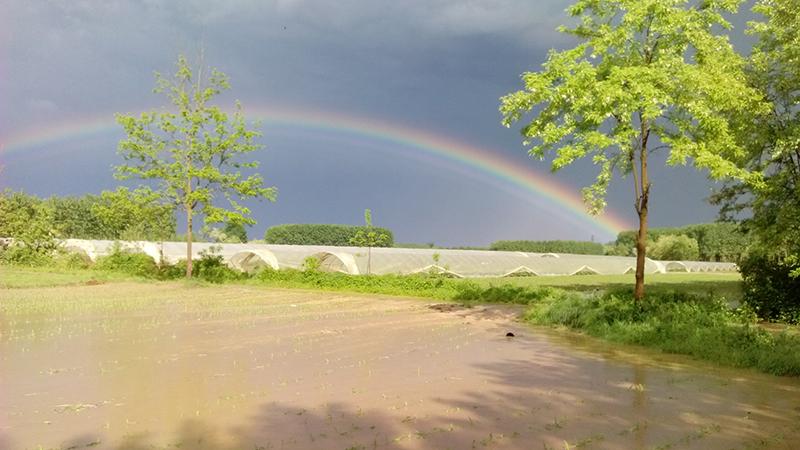 Santena, campi allagati, 14 maggio 2016